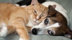 당신의 개와 고양이도 알츠하이머에 걸릴 수
