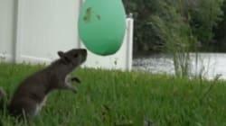 다람쥐가 튀어