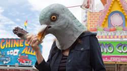 비둘기도 어린이와 유사한 방식으로