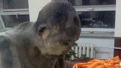 Μυστήριο με τον μοναχό μούμια που θεωρείται ακόμα