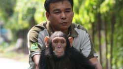 침팬지도 이주하면 새로운 언어를