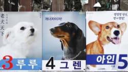 종로에 강아지 선거 포스터가