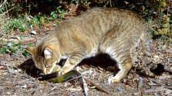 고양이와 여우가 호주 토종 동물을