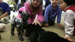 Robo Pets Can Never Replace Real