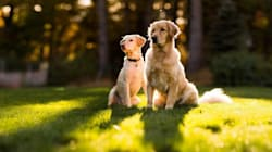 «Doggrin»: Η υπηρεσία που θα βοηθήσει τον σκύλο σας να βρει το άλλο του