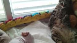 고양이는 아기가
