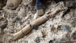 Βρέθηκε απολίθωμα που πιθανόν ανήκει στο πρώτο είδος ανθρώπου που πάτησε στη