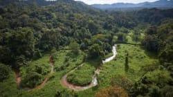 Une cité mythique découverte dans la jungle au