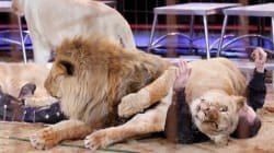 10 Reasons Why We Must Consign Wild Animal Circuses to