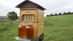 L'invention qui révolutionne l'apiculture et fascine les