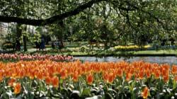 Les 10 plus beaux jardins du monde