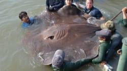 세계에서 가장 큰 민물고기를