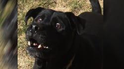 Ce chien qui a très envie de jouer a bien fait rire les