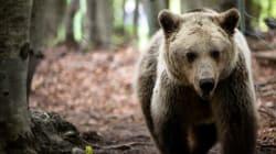 Το ξύπνημα της άνοιξης. Οι αρκούδες στο Νύμφαιο βγήκαν από τη χειμερία