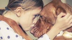 개가 인간의 면역체계를 강화해주는