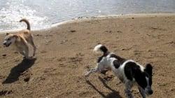 HappyDog, le nouveau centre canin de Raoued qui tente de sauver les chiens battus
