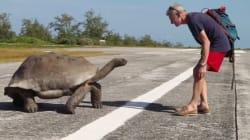 자이언트 거북의 사랑을 방해하지