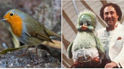 Which Should Be Britain's National Bird? Cast Your Vote
