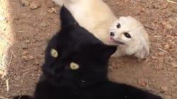 동물보호소에서 만난 사막여우와 고양이의