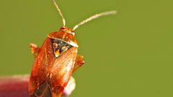 Βίντεο: Άνθρωποι δοκιμάζουν έντομα για πρώτη