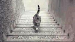 Ce chat monte ou descend les escaliers selon vous