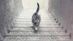 Που πιστεύετε πως πάει αυτή η γάτα; Πάνω ή