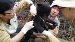 '멸종위기' 반달가슴곰 5마리가
