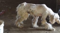 생지옥에 방치된 동물들 | 동물보호법 개정이 시급한