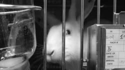 토끼가 마스카라를 바르지 않는 날을 위해 | 화장품 동물실험 금지법 통과를