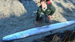 Γιγάντιο μυθικό ψάρι που τρώει τις σάρκες του ξεβράστηκε στις ακτές της Νέας