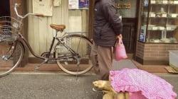 핑크 거북이의 도쿄