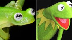 개구리 인형과 똑 닮은 개구리