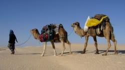 Savez-vous combien coûte une balade en chameau en Tunisie? Google vous