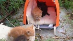 Αυτά είναι τα πανέμορφα γατάκια που έσωσαν οι αστυνομικοί της ομάδας