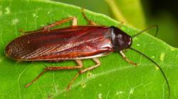 Προϊστορική κατσαρίδα - αρπαχτικό ανακαλύφθηκε στη