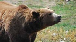 Αρκούδα κάνει pole dancing και η κάμερα καταγράφει τον «αισθησιακό» χορό