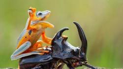 딱정벌레에 올라탄 개구리의