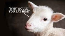 채식주의자가 제일 짜증스럽게 느껴질