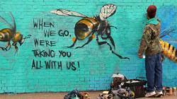Ce street-artiste peint des abeilles sur les murs et appelle à les