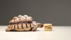 팬케이크를 좋아하는 거북이의