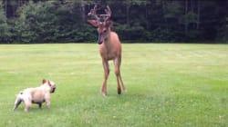 집 정원에서 사슴과 마주친