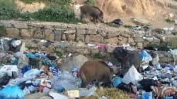 Vous en avez marre de voir ça en Tunisie? Cette application est faite pour