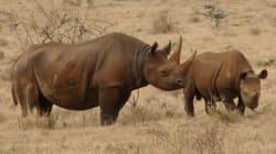 Il tue l'un des derniers rhinocéros noirs pour des milliers de