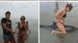 돌고래를 죽인 이 연놈들을