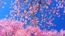 Spring Renewal