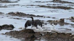 Καλιφόρνια: Η νέα μυστηριώδης πετρελαιοκηλίδα που πλήττει τις