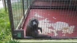 동물원 '최소공간권'은 최저임금제와