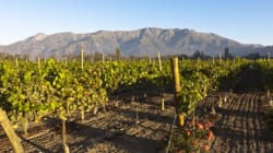 Yes Switzerland Has Delicious Wine - But You'll Have to Visit to Try