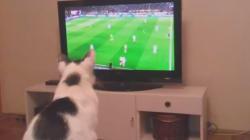 Κολλημένος με τη μπάλα: Ο γάτος που δεν χάνει αγώνα για