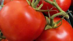 «Πόλεμος» λαχανικών μεταξύ ΠΓΔΜ -